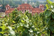 Wines from the Prague Botanical Garden
