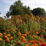 Prague botanical garden