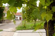 The biggest winemaking town in the Czech Republic – Velké Bílovice