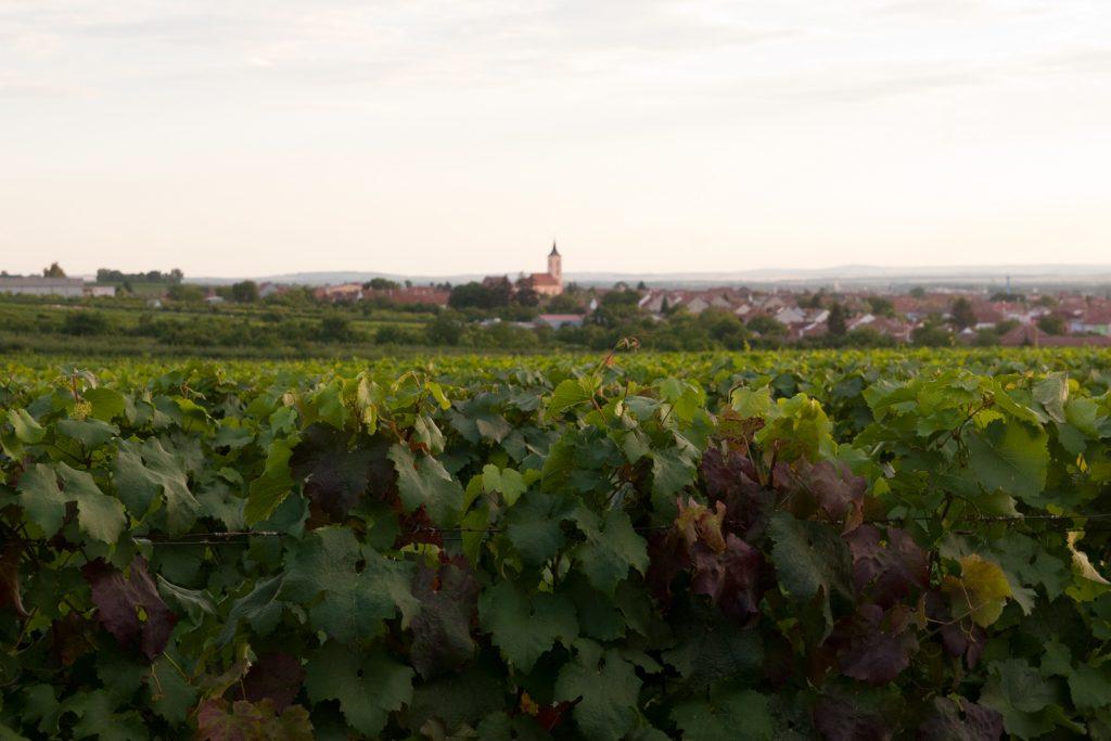 Velké Bílovice view from hotel
